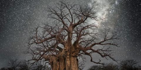 Beth Moon fotografa fotos arboles longevos del mundo paisaje y naturaleza