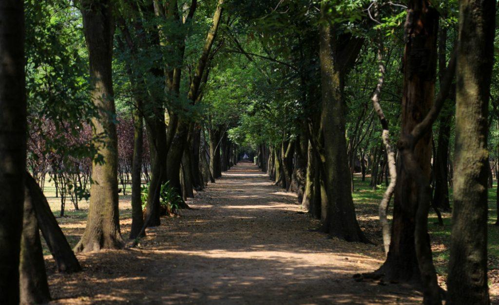 Parque Viveros Coyoacán fotofestín