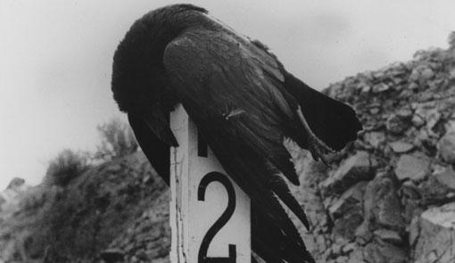 lola alvarez bravo fotografa mexicana cuervo kilometro