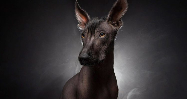 Aarón Cadena Concurso de Fin de Año fotofestín 2017
