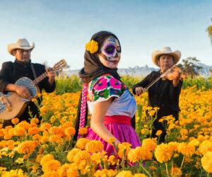 Moi Nit Studio fotógrafo mexicano street dia de muertos cempasuchil 2 de noviembre ofrenda Eduardo Moisés Ramírez fotofestin