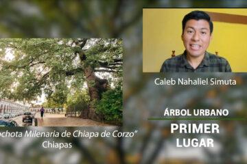 Primer-Lugar arbol urbano concurso de fotografia paisaje naturaleza arboles caleb nahaliel simuta jurado ariana oropeza